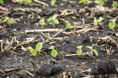 Illinois crop conditions lag neighboring states