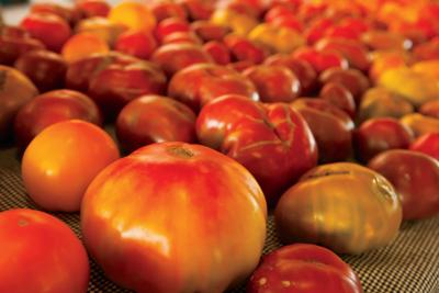 U of I Extension offers specialty crop COVID-19 disinfecting guidelines