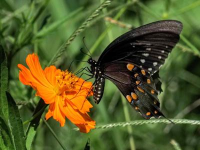 Partners' pollinator plot creating lots of buzz