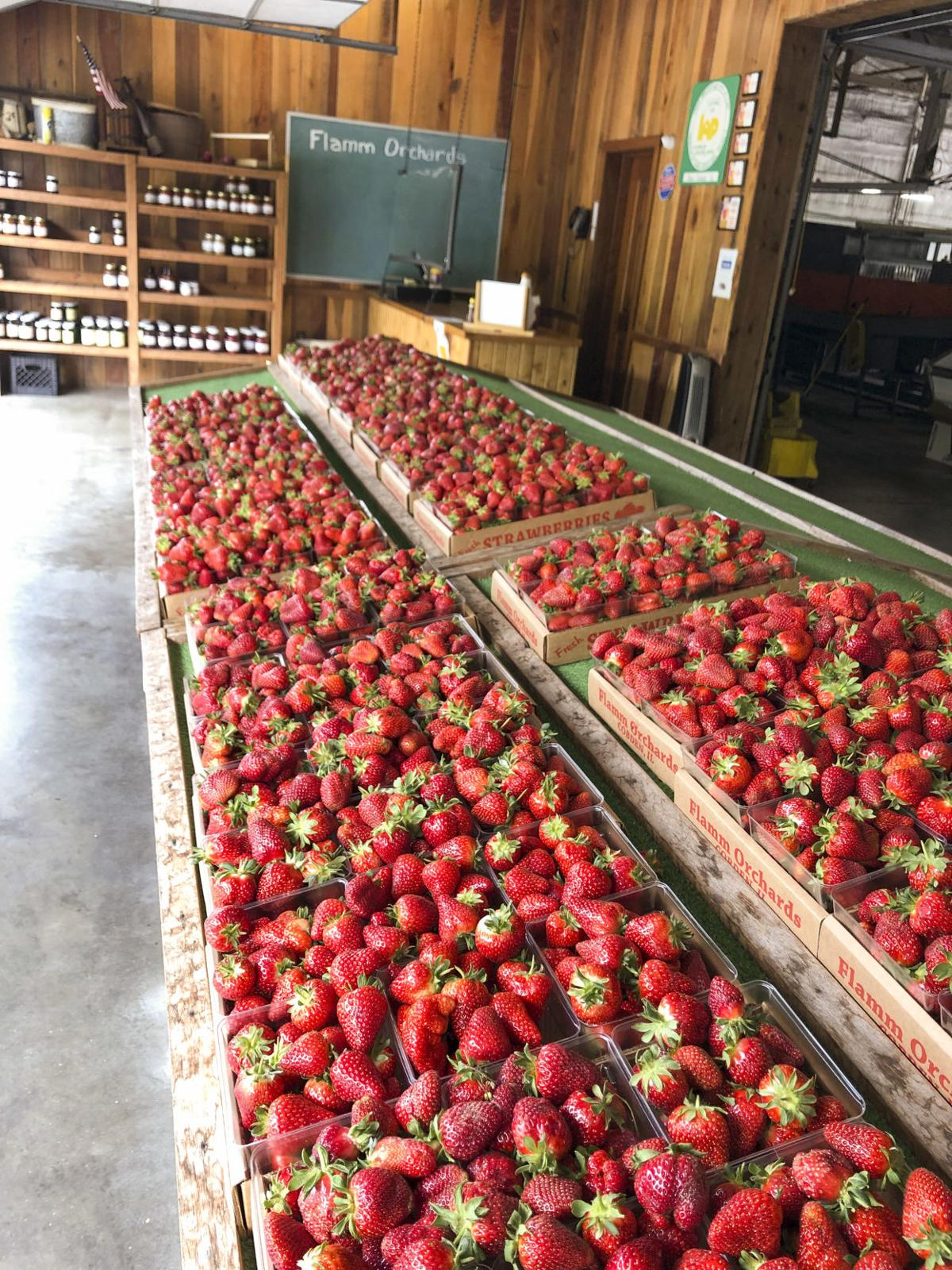 Strawberries selling out daily on southern Illinois farm