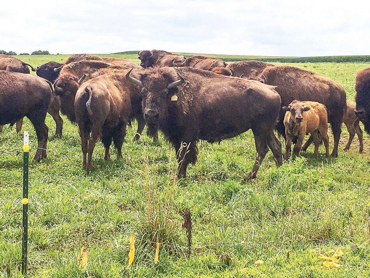 Piatt County farm finds demand growth for America's original red meat