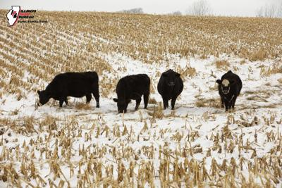 Cattle inventory down from year ago