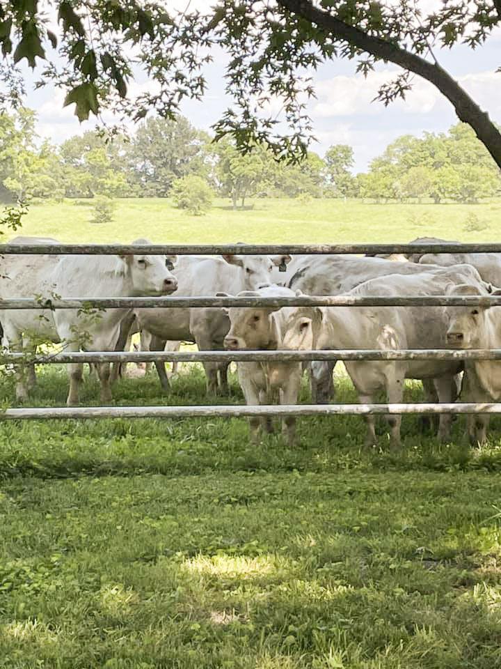 Local taste makes the cut at Foxglove Acres Ranch