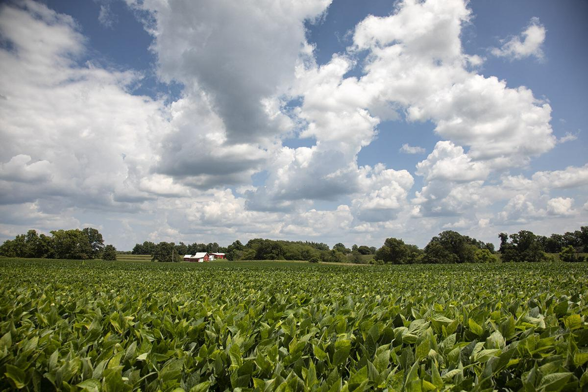 Think four Ds as threats to effective farm businesses