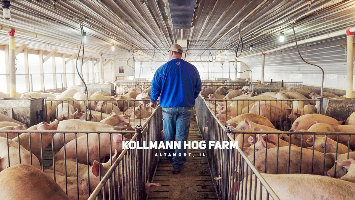 IPPA leader: Technology drives efficiency on hog farms