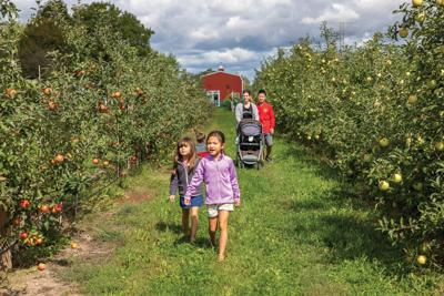 Autumn Adventures: How farm and food-related destinations have evolved