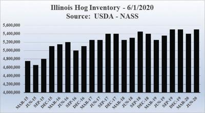 No supply shortages of pork; swine inventory sets record