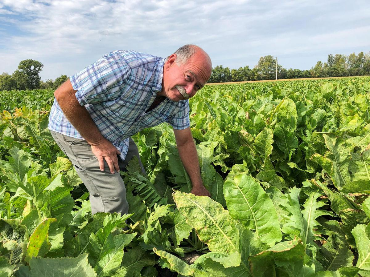 Brinkman finds success with everything from hogs to horseradish
