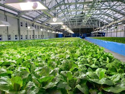 Piatt County farm dives into aquaponics for sustainability