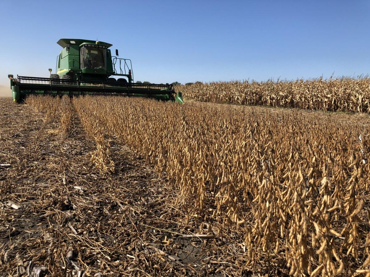 Corn, soybeans and wedding bells