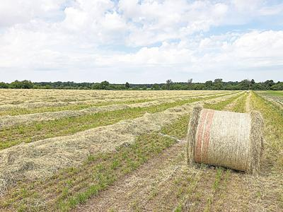 Pasture, hay conditions improve; Illinois Forage Expo July 29