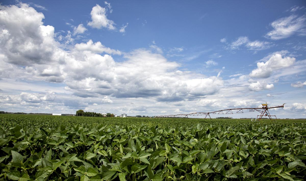 Farmland values remain resilient amid pandemic