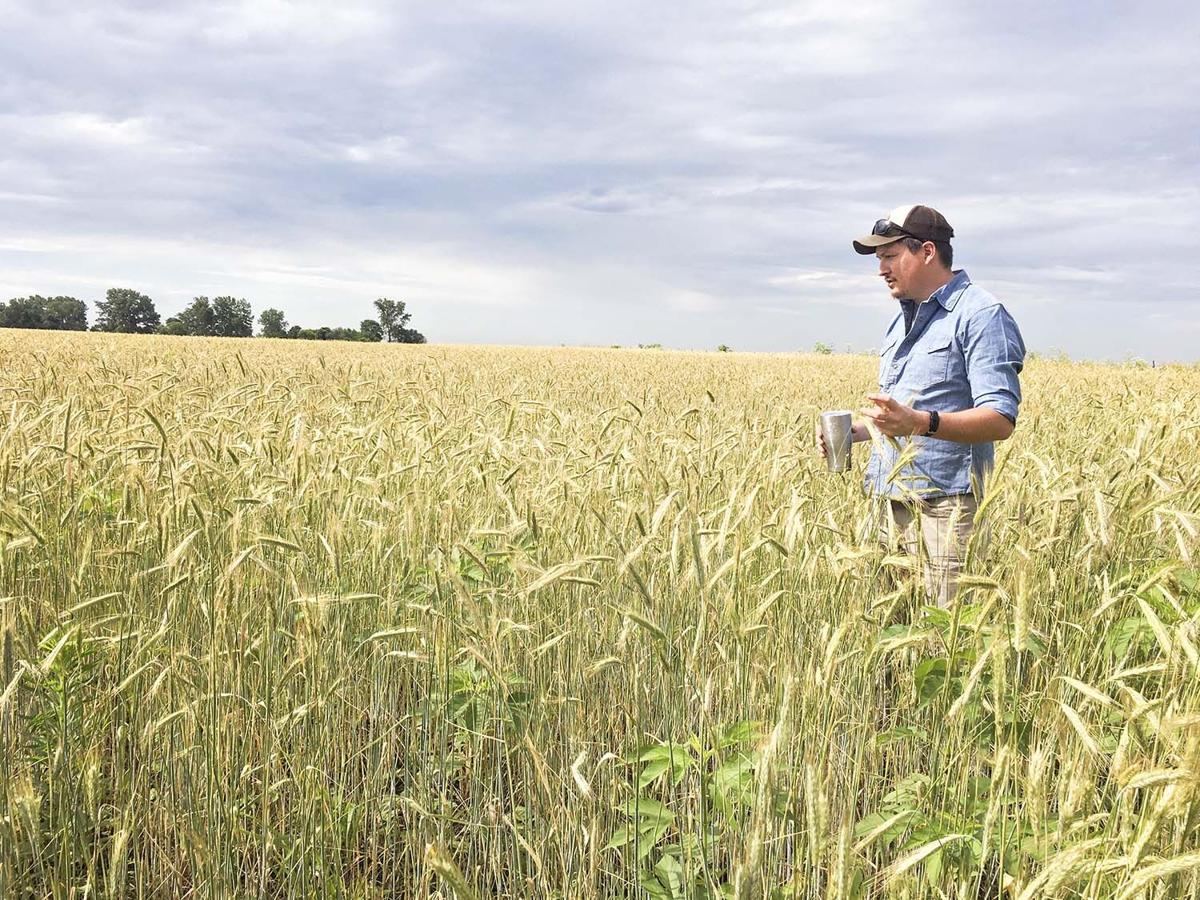 Family farm, heirloom corn creating unique distillery