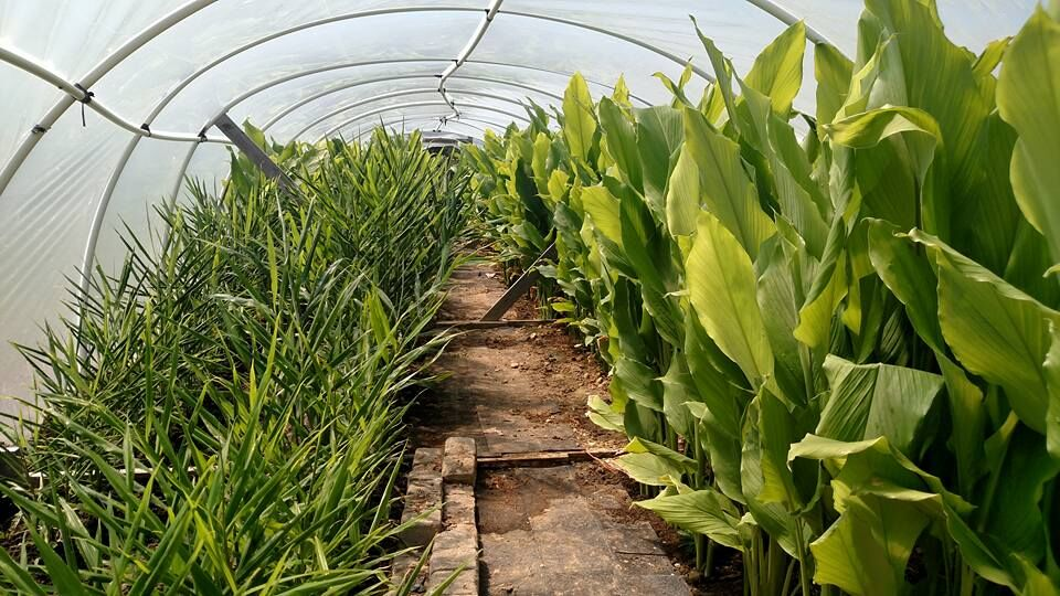 Johnson County specialty farm offers unique crops, value-added products