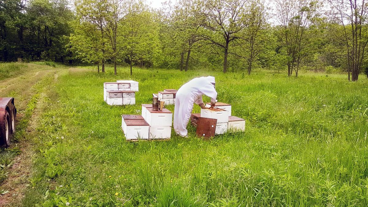 Specialty honey farm adds sweetness, more to lives