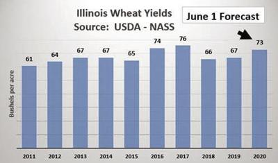 U.S. corn, soybean production estimates unchanged; wheat rises