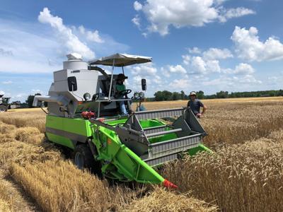 U of I wheat variety trials focus on profitability