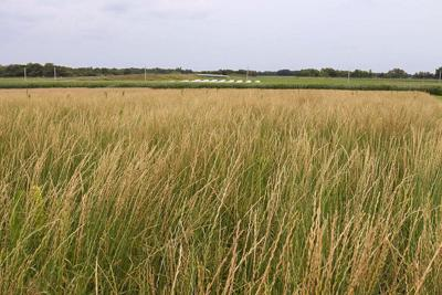 NEW APPROACH: WIU mixing cover crops, livestock with cash crops