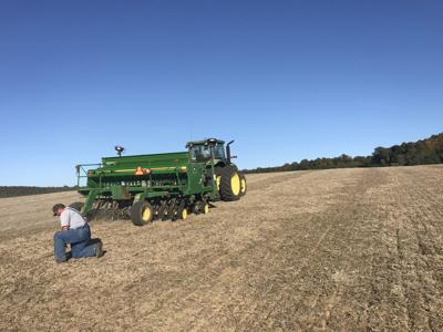 Accelerated harvest pace bodes well for wheat growers