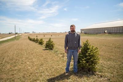 Sprucing up the place; IPPA restarts tree buffer program