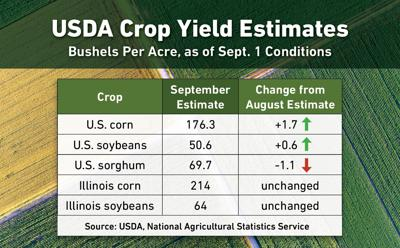 USDA forecasts slightly higher yields as harvest begins