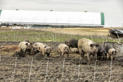 What does COVID-19 mean for consumers as farmers grapple with plant closures