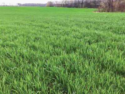 Illinois cover crop adoption nearly doubles