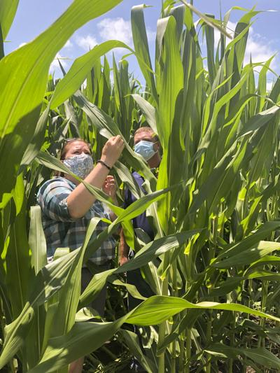 Nitrogen research focus of first NLRS virtual field day