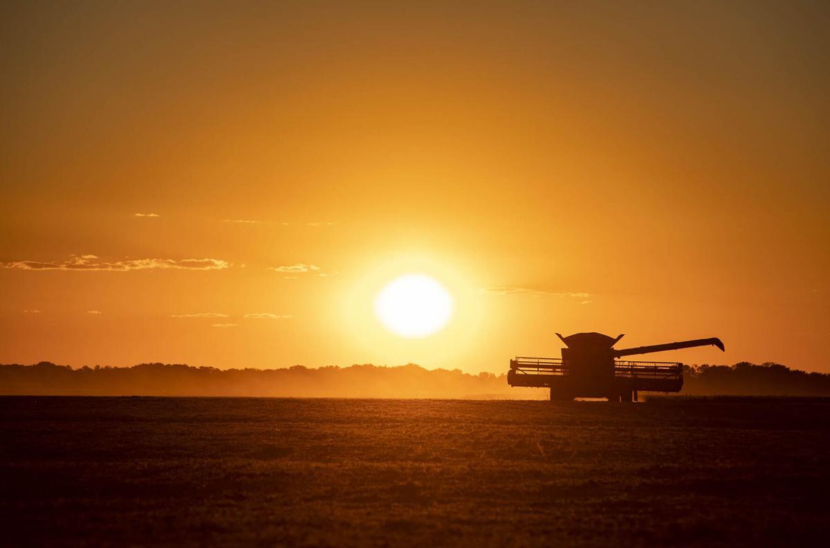Illinois farm photos: Summer-Fall 2021