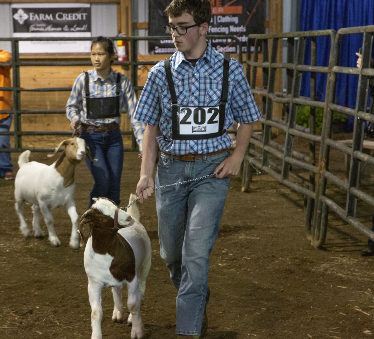 livestock sale 35.jpg