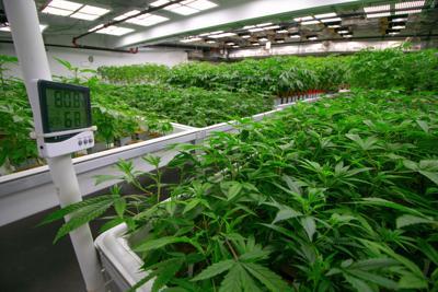 Indoor Cannabis Facility Temperature