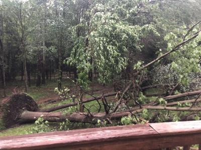 tree down from storm_052519