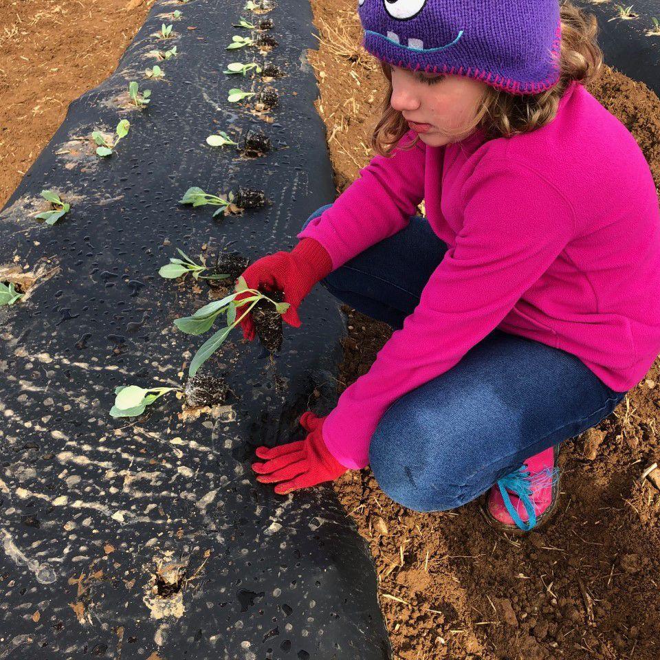 Kids home from school? Why not start a garden?