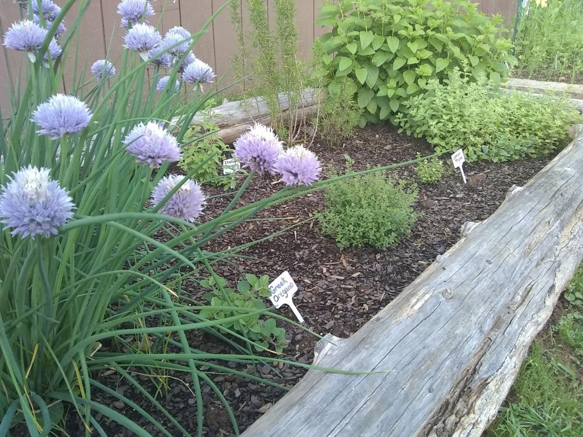 Photo_growing herbs_05_22-2019.jpg
