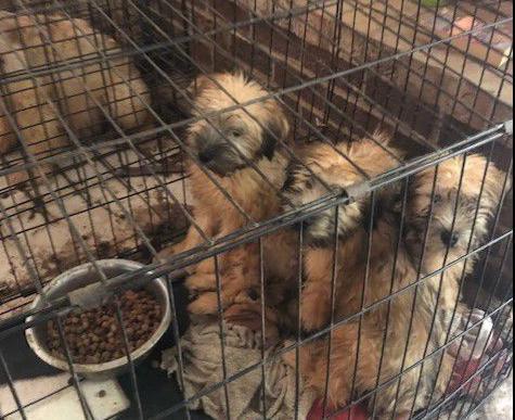 photo_ft_news_puppy mill 1_091819.jpg