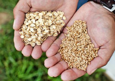 Issue No. 24: Organic oat farming outside of Pittsburgh