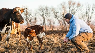 The art of 21st-century cheese production at Lost Lake Farm