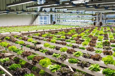 Issue No. 7: Microgreens in Jackson, Wyoming