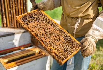 Issue no. 19: Honey in Omaha