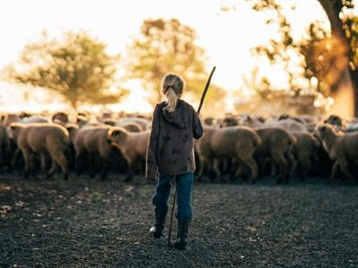 Leading the flock: American Lamb ranchers honor both the animal and consumer
