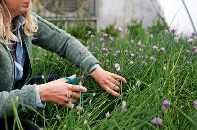 Issue no. 16: Herb farming in Idaho