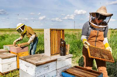 Living the sweet life with honey producer Fat Head Farms