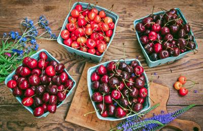 Issue No. 22: Cherries in Northern Michigan