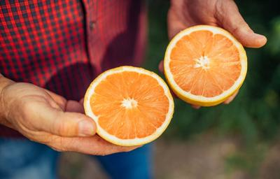 Issue no. 3: Organic grapefruit farming in southern Texas