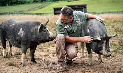 The pork issue: Cuts, industry terms and juicy recipes