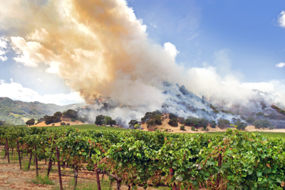 How do wildfires affect wine country?