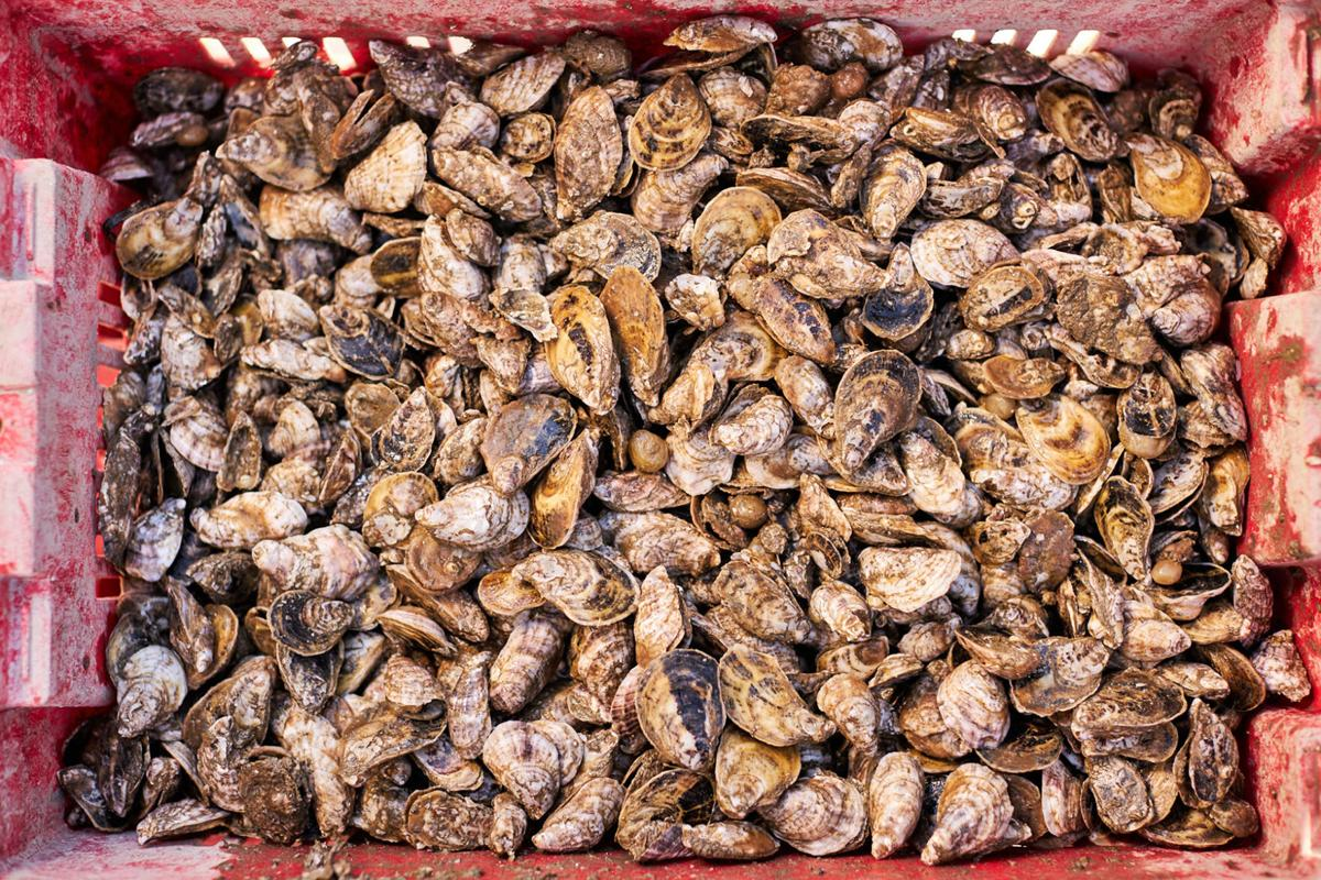 Cherrystone Aqua-Farms