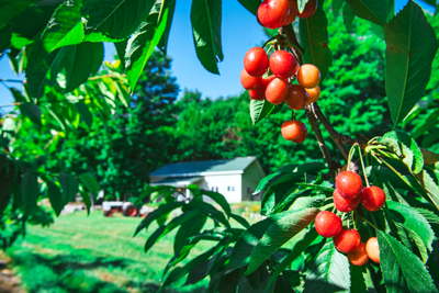 Embracing agritourism in the cherry capital of the world