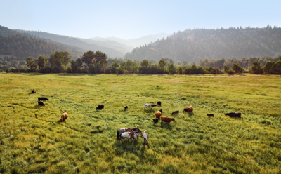 Regenerative ranching under the big sky at Oxbow Cattle Company