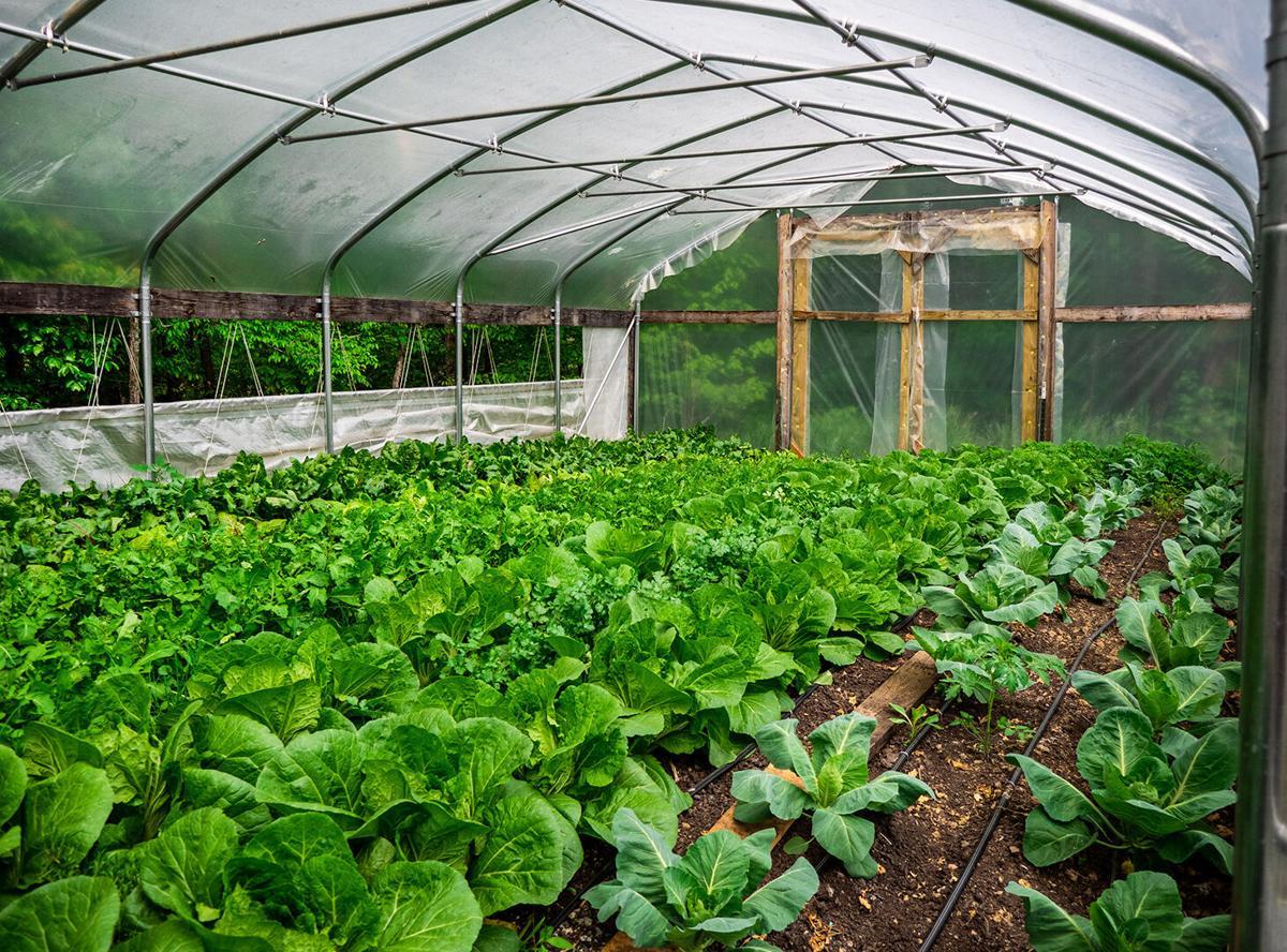 Scratch - greenhouse